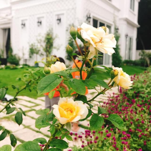 Biệt thự nhà vườn ngập tràn các loại hoa của gia đình ở Bình Dương-7