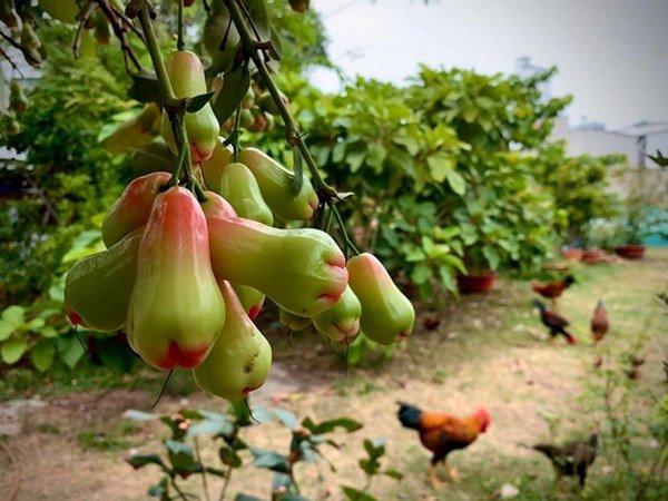 2 nữ nghệ sĩ mua nhà vườn thỏa đam mê: Rau củ chất đầy, thuê người làm không xuể việc-2