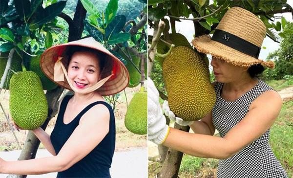 2 nữ nghệ sĩ mua nhà vườn thỏa đam mê: Rau củ chất đầy, thuê người làm không xuể việc-14