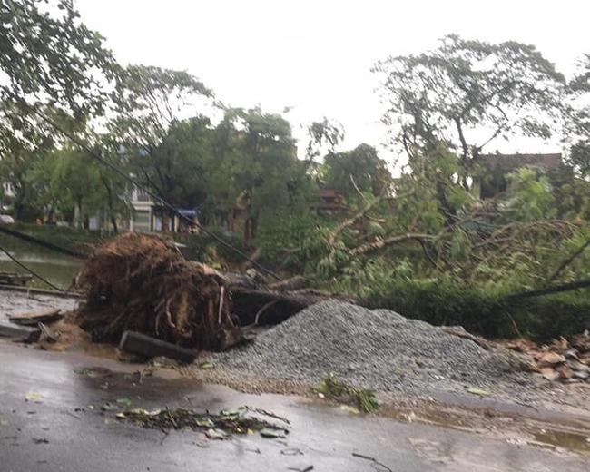 Ảnh, clip: Bão số 5 đổ bộ vào Thừa Thiên Huế gây mưa to gió giật kinh hoàng quật đổ cây xanh, giao thông hỗn loạn-6