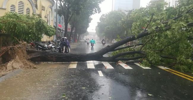 Ảnh, clip: Bão số 5 đổ bộ vào Thừa Thiên Huế gây mưa to gió giật kinh hoàng quật đổ cây xanh, giao thông hỗn loạn-5