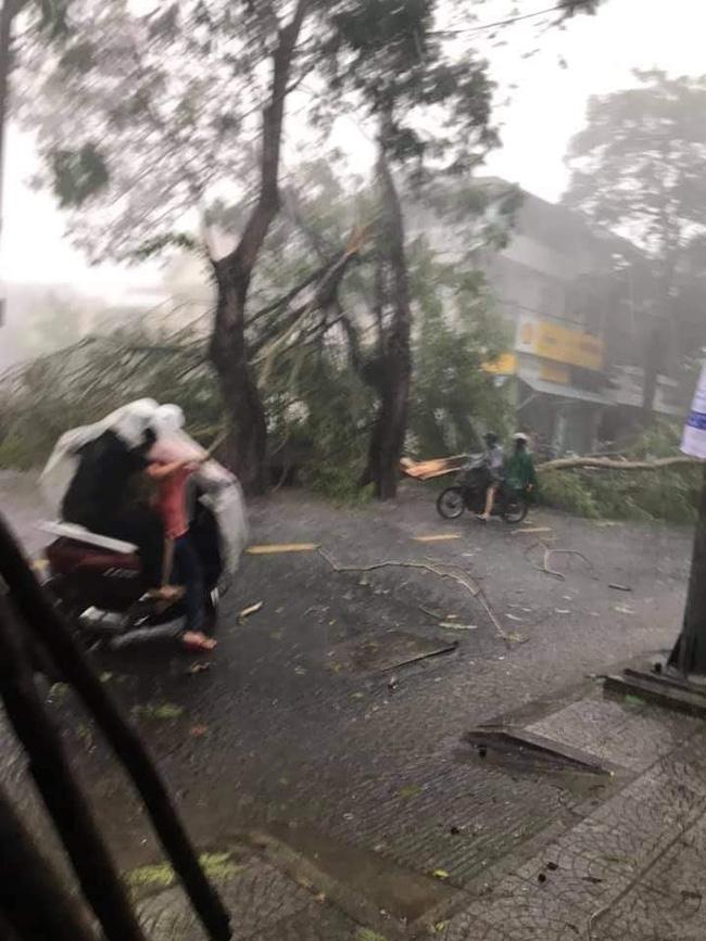 Ảnh, clip: Bão số 5 đổ bộ vào Thừa Thiên Huế gây mưa to gió giật kinh hoàng quật đổ cây xanh, giao thông hỗn loạn-9