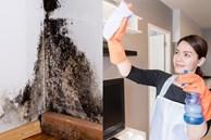 Cách tẩy vết mốc trên tường nhanh chóng mà không phải sơn lại