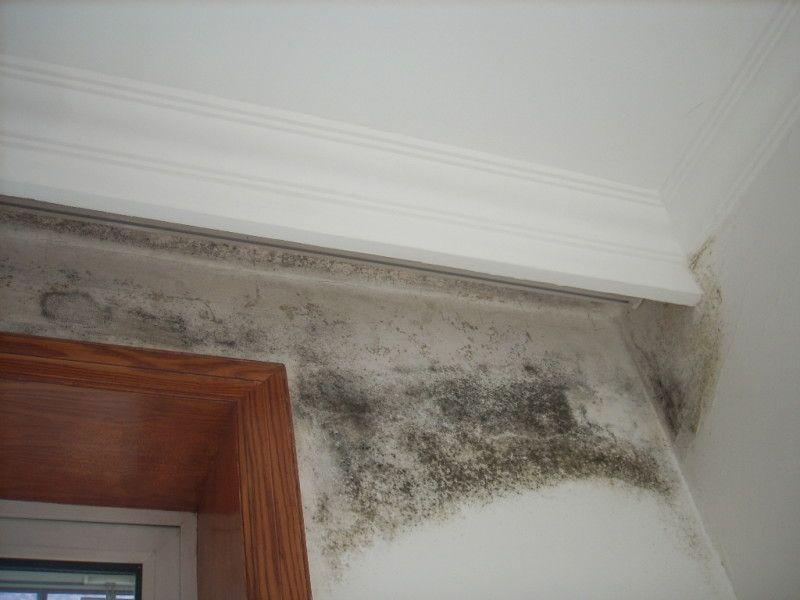 Cách tẩy vết mốc trên tường nhanh chóng mà không phải sơn lại-2