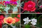 Khu vườn quanh năm chỉ có mùa xuân với hoa nở tưng bừng của cô giáo dạy Toán-21