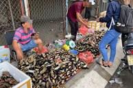 Thực hư cua Cà Mau 50.000 đồng/3 con bán đầy đường, 'bao ăn'