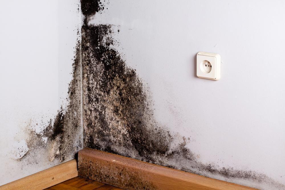 Cách tẩy vết mốc trên tường nhanh chóng mà không phải sơn lại-1