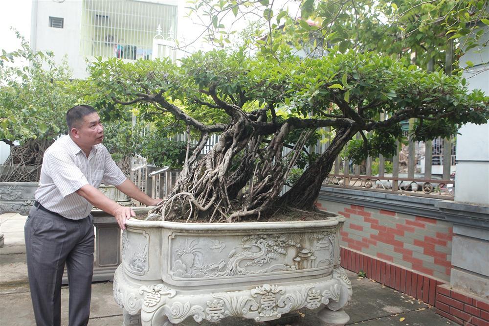 Chiêm ngưỡng bộ ba cây si cổ trị giá chục tỷ đồng của đại gia Vĩnh Phúc-9