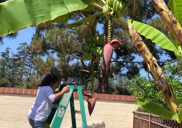 Giữa ồn ào chuyện con trai Ngô Kiến Huy, Thanh Thảo khoe vườn nhà xanh mát trong biệt thự triệu đô ở Mỹ-10
