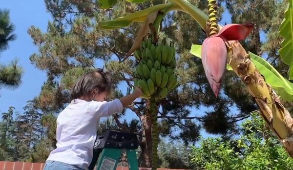 Giữa ồn ào chuyện con trai Ngô Kiến Huy, Thanh Thảo khoe vườn nhà xanh mát trong biệt thự triệu đô ở Mỹ-11