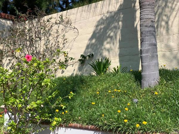 Giữa ồn ào chuyện con trai Ngô Kiến Huy, Thanh Thảo khoe vườn nhà xanh mát trong biệt thự triệu đô ở Mỹ-2