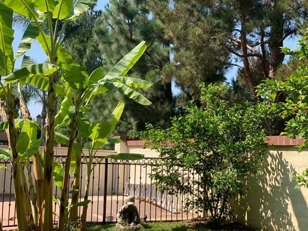 Giữa ồn ào chuyện con trai Ngô Kiến Huy, Thanh Thảo khoe vườn nhà xanh mát trong biệt thự triệu đô ở Mỹ-8