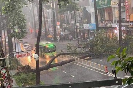Nạn nhân bị cây xanh bật gốc đè trúng trong cơn mưa lớn ở Sài Gòn đã tử vong