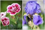 3 loài hoa thịnh vượng, điềm lành và sung túc trồng trong nhà không phải ai cũng biết