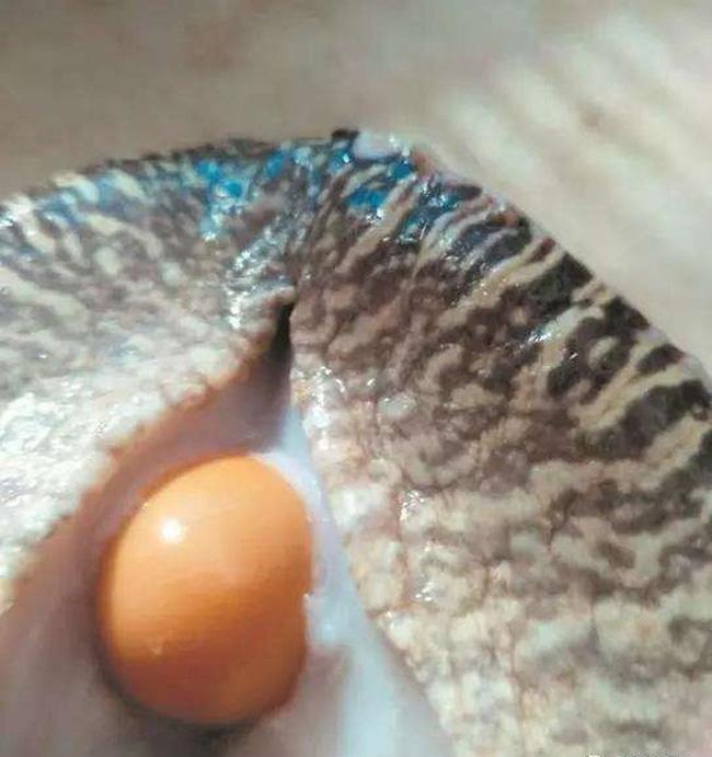 Mua 5 con ốc sên tiếp đãi khách quý, người đàn ông ngỡ ngàng khi phát hiện dị vật bên trong khiến cuộc đời rẽ sang hướng khác-2