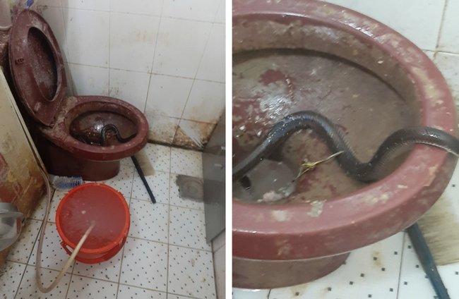 Vụ lò bánh mì ở Sài Gòn bị tố dùng thịt bẩn làm nhân, khu chế biến có giòi ngoe nguẩy: Chủ lò cũng không biết bé na ở đâu ra-12