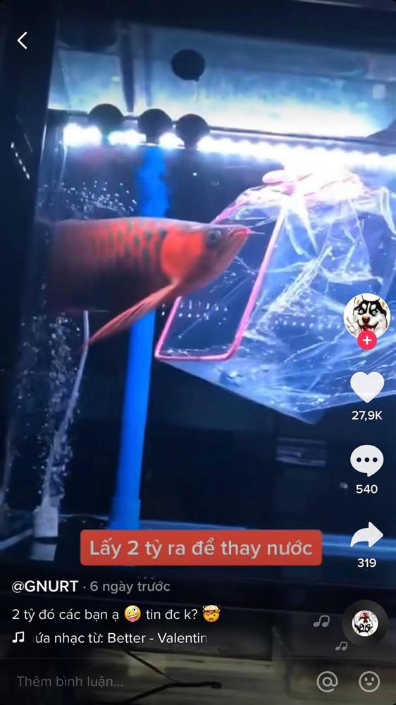 Cất 2 tỷ bên trong bể cá cảnh, ông chủ mỗi lần thay nước đều phải rón rén làm một công việc vô cùng vất vả-2