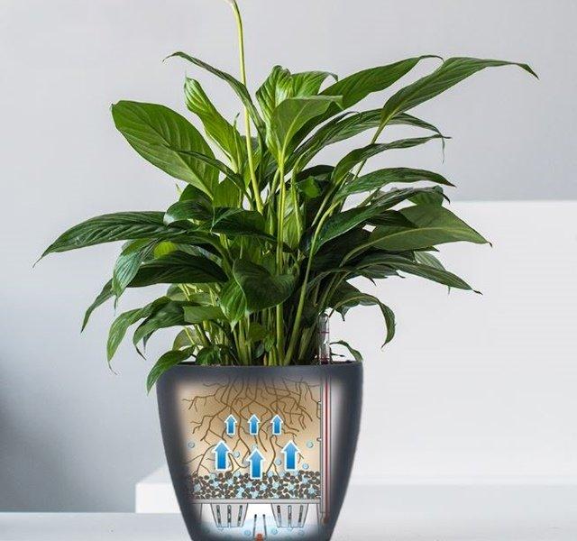 Các mẫu cây cảnh để bàn đẹp, hợp tuổi, hợp mệnh phong thủy-10