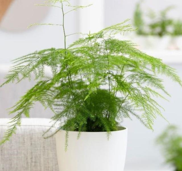 Các mẫu cây cảnh để bàn đẹp, hợp tuổi, hợp mệnh phong thủy-24