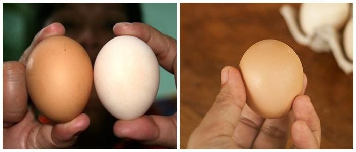 Mua trứng nên chọn quả to hay nhỏ thì ngon, chuyên gia mách sự thật ai cũng bất ngờ-1