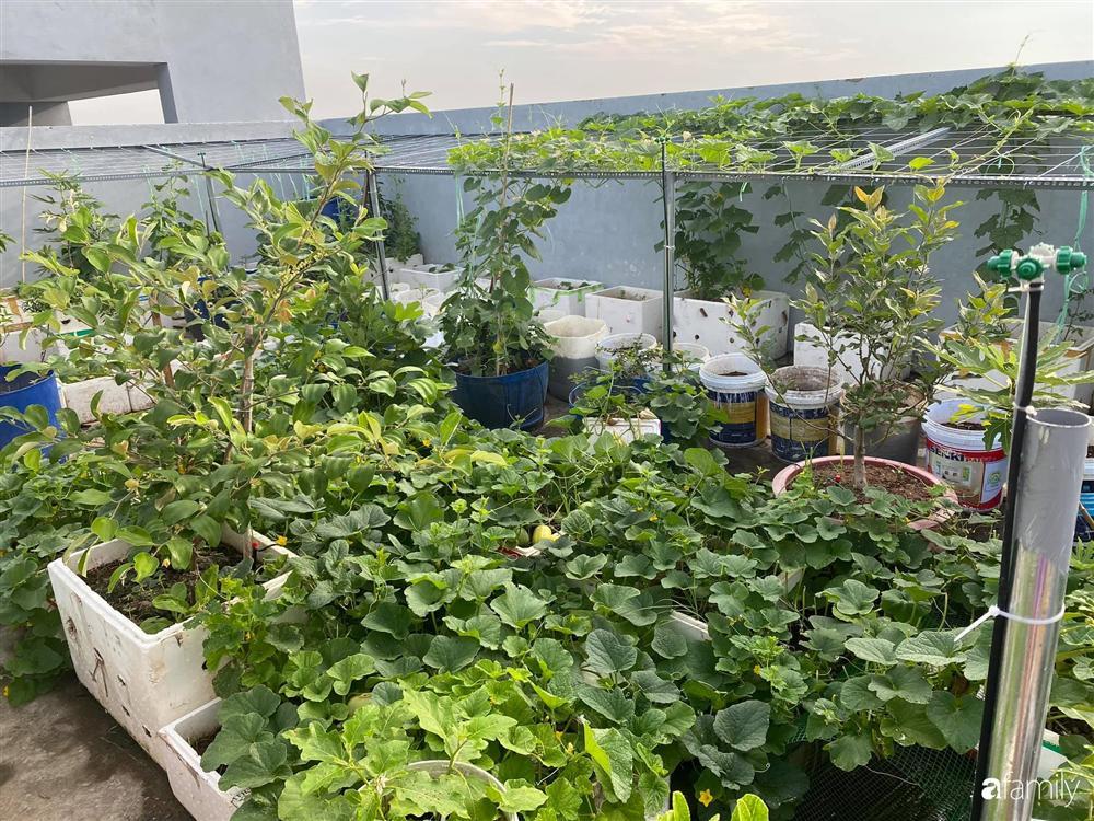 Tận dụng sân thượng chung cư, nữ giám đốc ở Hà Nội đã trồng được một vườn rau đủ loại rau quả sạch với 8 triệu tiền đầu tư-1