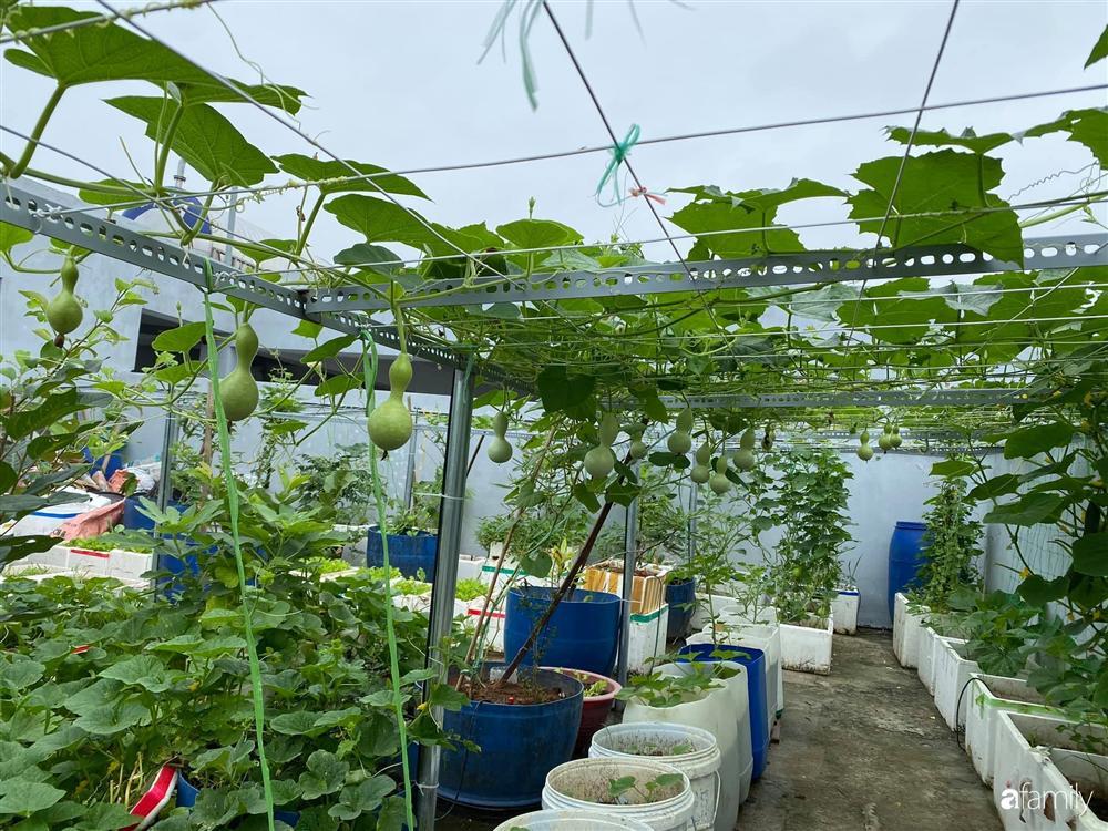 Tận dụng sân thượng chung cư, nữ giám đốc ở Hà Nội đã trồng được một vườn rau đủ loại rau quả sạch với 8 triệu tiền đầu tư-2