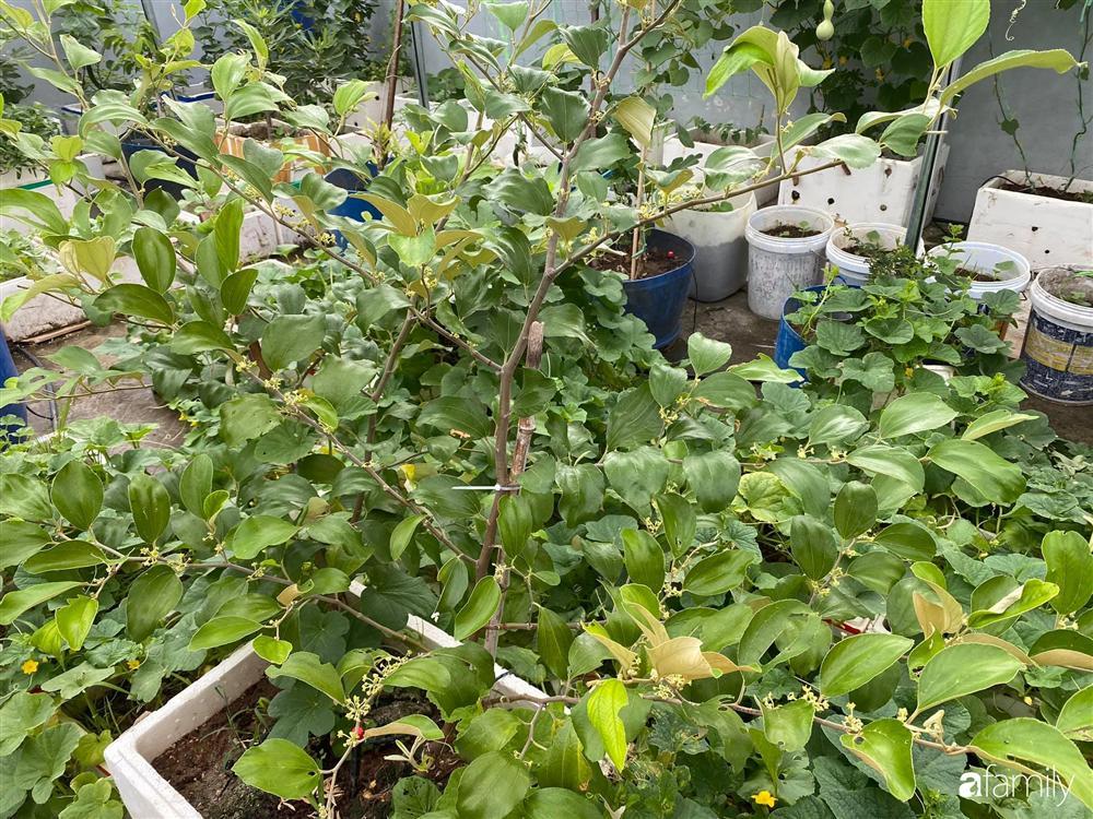 Tận dụng sân thượng chung cư, nữ giám đốc ở Hà Nội đã trồng được một vườn rau đủ loại rau quả sạch với 8 triệu tiền đầu tư-4