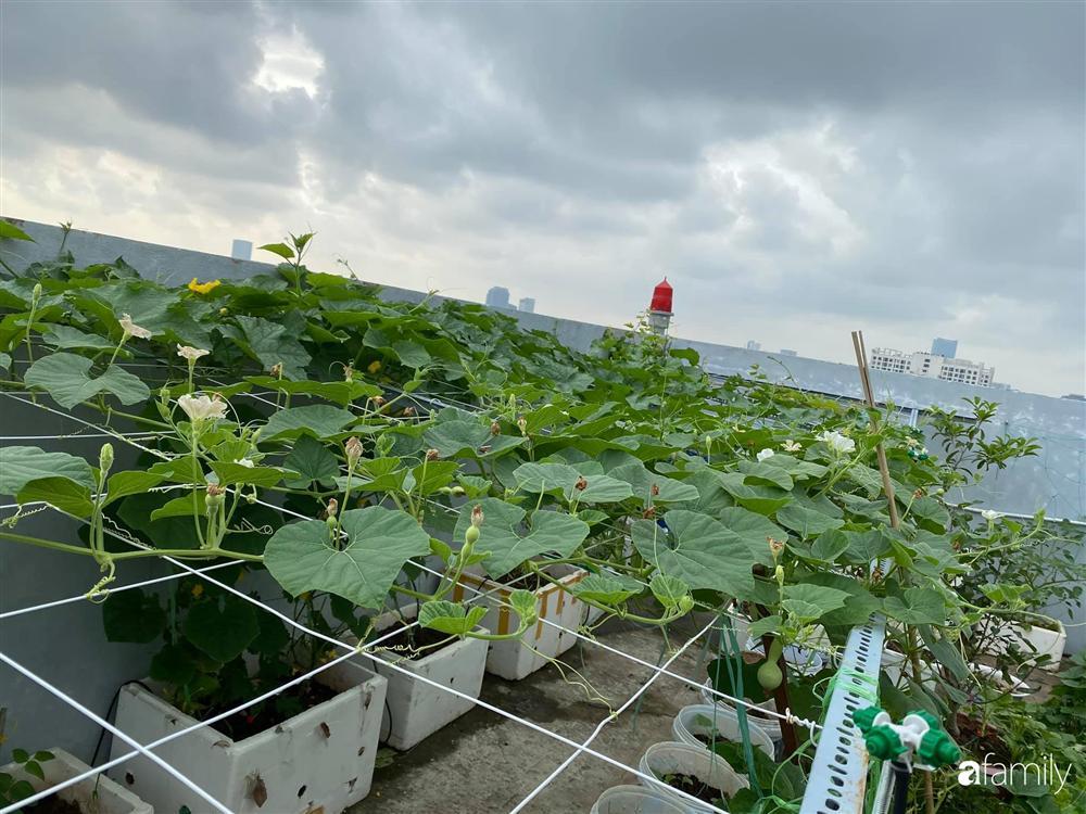 Tận dụng sân thượng chung cư, nữ giám đốc ở Hà Nội đã trồng được một vườn rau đủ loại rau quả sạch với 8 triệu tiền đầu tư-7