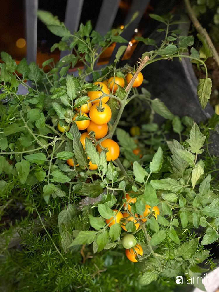 Tận dụng sân thượng chung cư, nữ giám đốc ở Hà Nội đã trồng được một vườn rau đủ loại rau quả sạch với 8 triệu tiền đầu tư-10