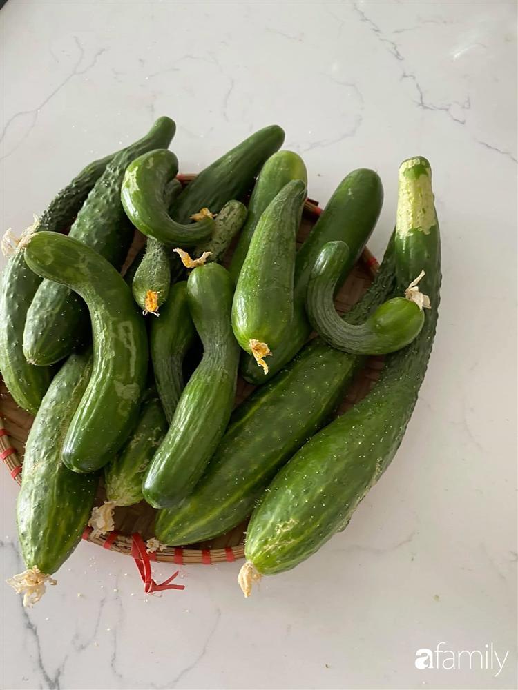 Tận dụng sân thượng chung cư, nữ giám đốc ở Hà Nội đã trồng được một vườn rau đủ loại rau quả sạch với 8 triệu tiền đầu tư-14