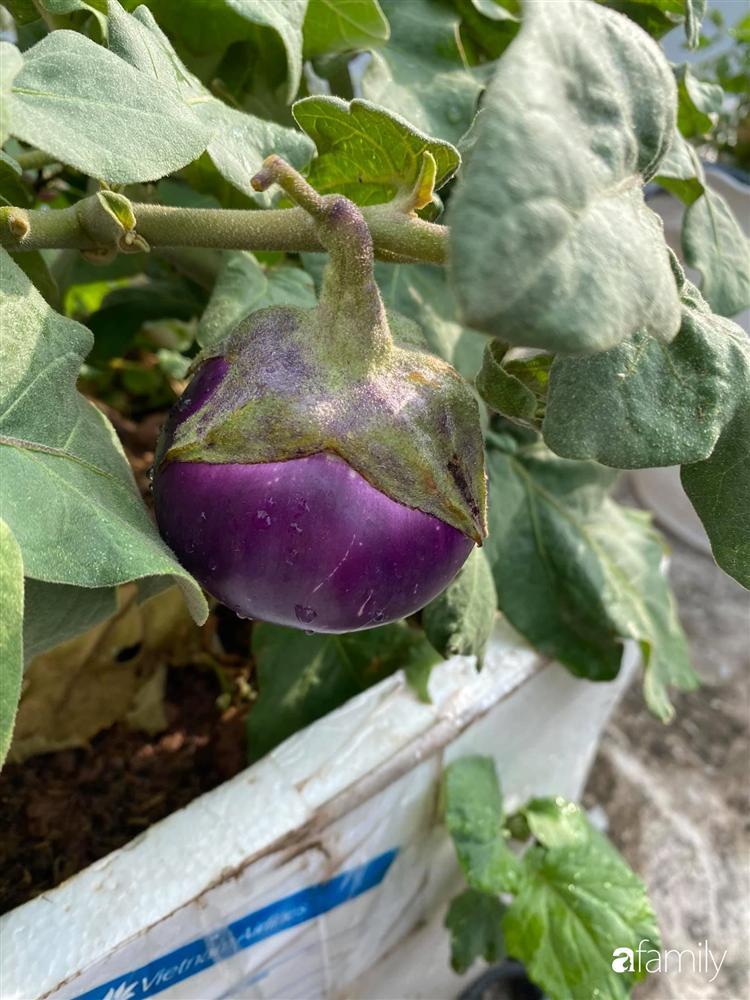 Tận dụng sân thượng chung cư, nữ giám đốc ở Hà Nội đã trồng được một vườn rau đủ loại rau quả sạch với 8 triệu tiền đầu tư-27