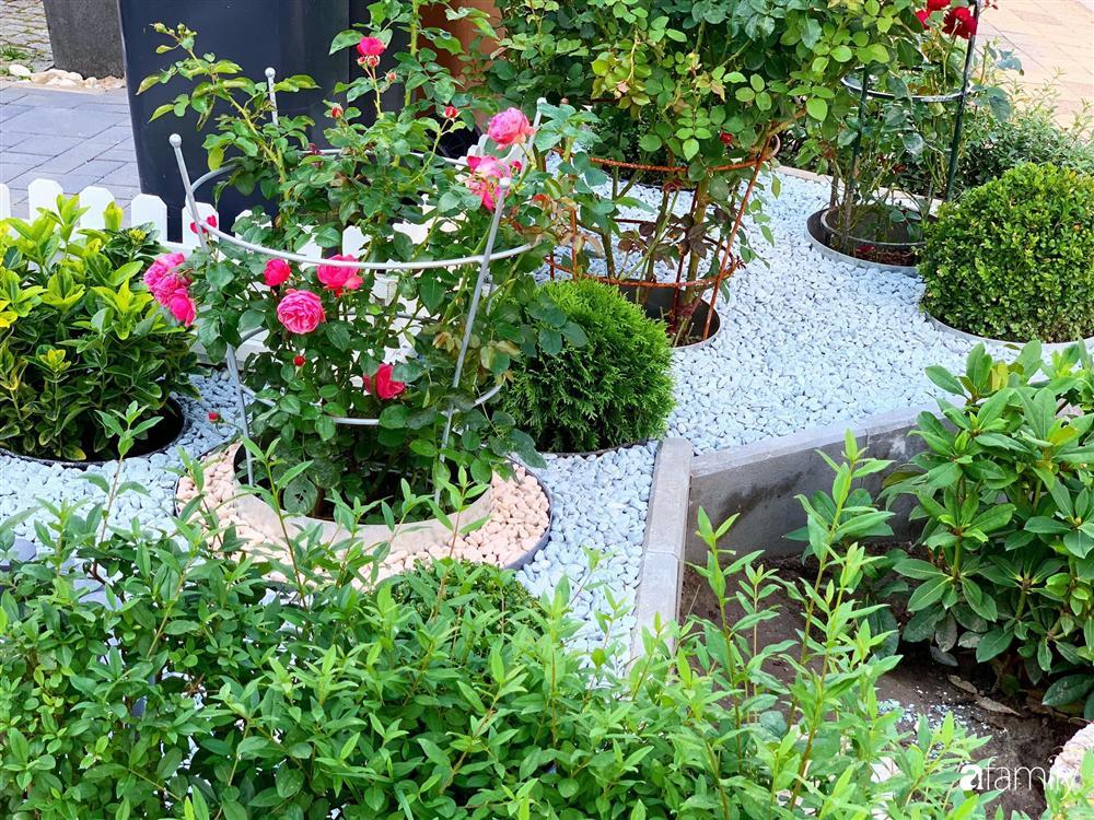 Vườn hoa 500m² đẹp như cổ tích được tạo bởi tình yêu thiên nhiên của cặp vợ chồng dành cả thanh xuân để trồng cây-10