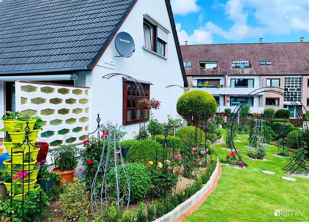 Vườn hoa 500m² đẹp như cổ tích được tạo bởi tình yêu thiên nhiên của cặp vợ chồng dành cả thanh xuân để trồng cây-12