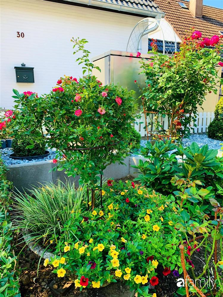 Vườn hoa 500m² đẹp như cổ tích được tạo bởi tình yêu thiên nhiên của cặp vợ chồng dành cả thanh xuân để trồng cây-18