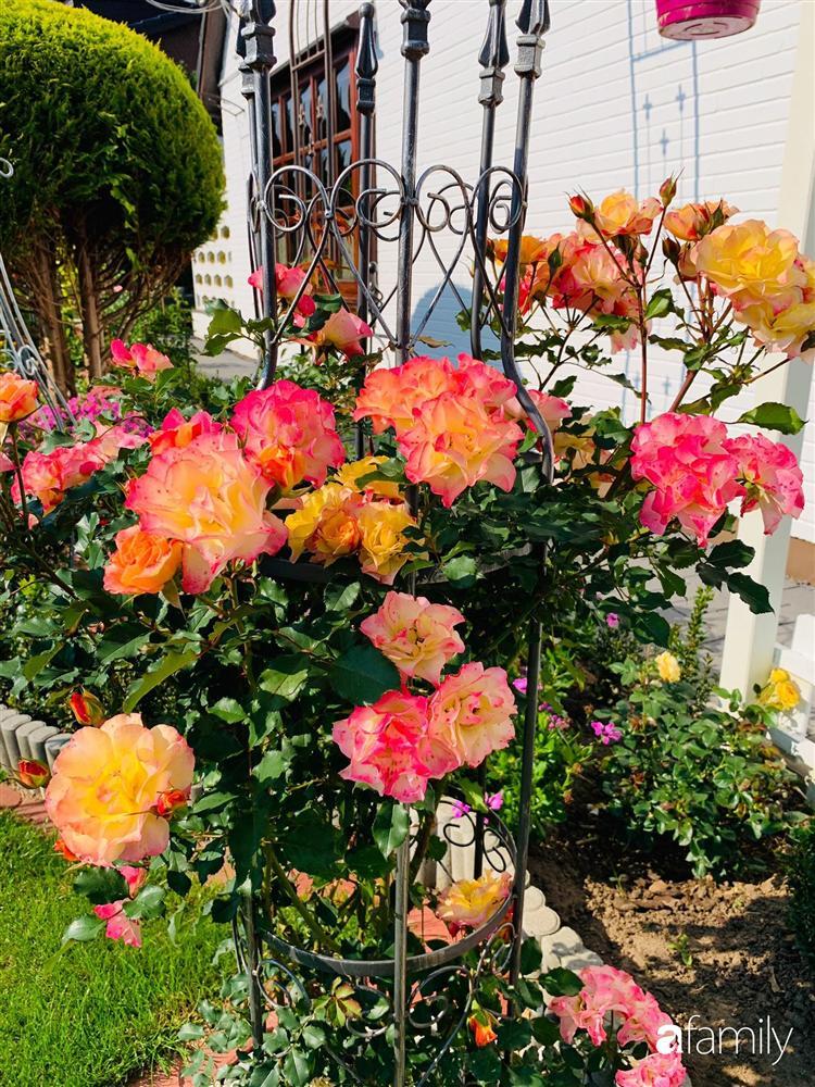Vườn hoa 500m² đẹp như cổ tích được tạo bởi tình yêu thiên nhiên của cặp vợ chồng dành cả thanh xuân để trồng cây-19