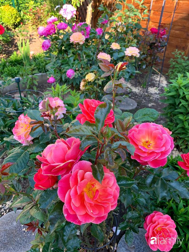 Vườn hoa 500m² đẹp như cổ tích được tạo bởi tình yêu thiên nhiên của cặp vợ chồng dành cả thanh xuân để trồng cây-20