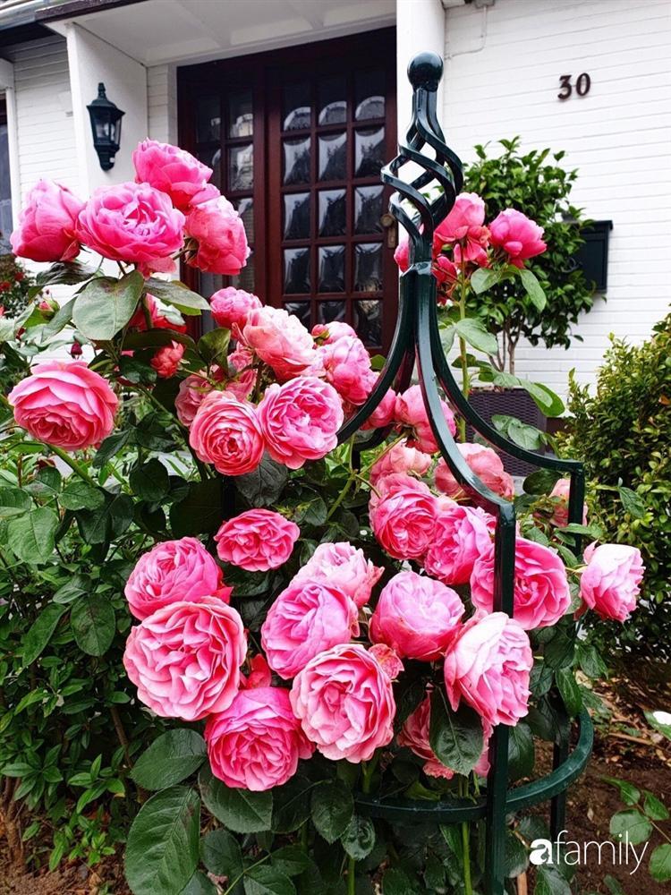 Vườn hoa 500m² đẹp như cổ tích được tạo bởi tình yêu thiên nhiên của cặp vợ chồng dành cả thanh xuân để trồng cây-24