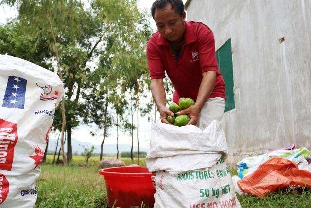 Dưa non tăng giá gấp 3, nông dân vét sạch ruộng cũng không đủ bán-6