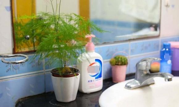 Không nên đặt những thứ này trong phòng tắm, dù chỉ có một thứ cũng không tốt cho sức khỏe-4