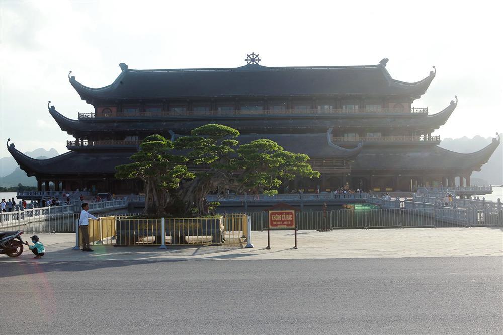 Cây sanh khủng thế nào khiến ông chủ ngôi chùa lớn nhất thế giới mê mẩn?-1
