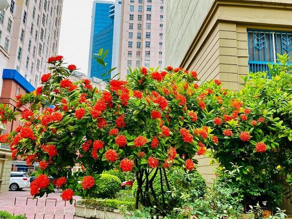 Nghệ sĩ Quang Tèo khoe khu vườn nhỏ muôn hoa đua sắc trước căn chung cư 7 tỷ đồng-2