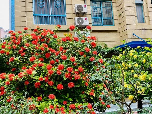 Nghệ sĩ Quang Tèo khoe khu vườn nhỏ muôn hoa đua sắc trước căn chung cư 7 tỷ đồng-3
