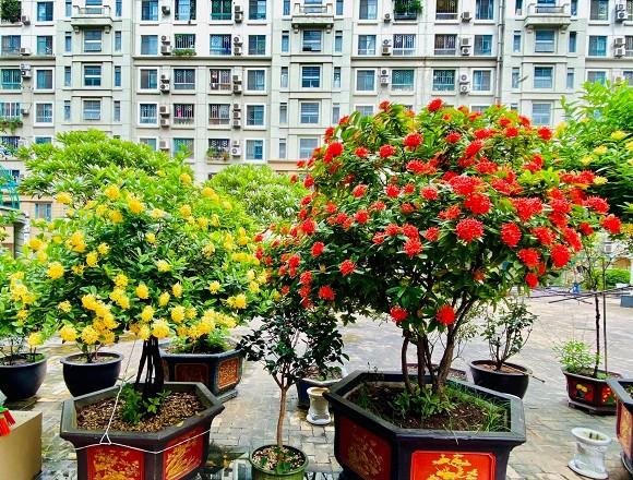 Nghệ sĩ Quang Tèo khoe khu vườn nhỏ muôn hoa đua sắc trước căn chung cư 7 tỷ đồng-4