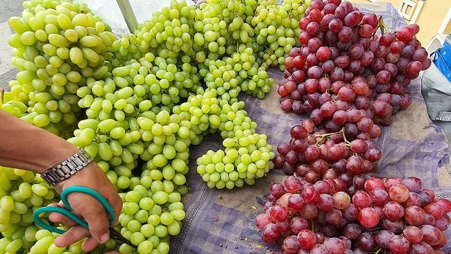 """Nho xanh không hạt giá siêu rẻ"""" bán tràn lan, người trồng nho ở Ninh Thuận nói gì?-3"""