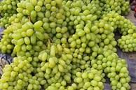 """Nho xanh không hạt giá """"siêu rẻ"""" bán tràn lan, người trồng nho ở Ninh Thuận nói gì?"""