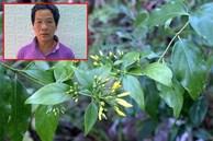 Dã tâm của gã đàn ông dùng lá ngón hạ độc cả nhà hàng xóm ở Tuyên Quang vì món tiền 500.000 đồng