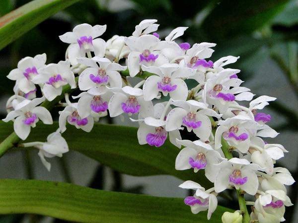 3 tháng cuối năm nhất định phải đặt loại hoa này trong phòng khách, kéo may mắn về gấp đôi-2