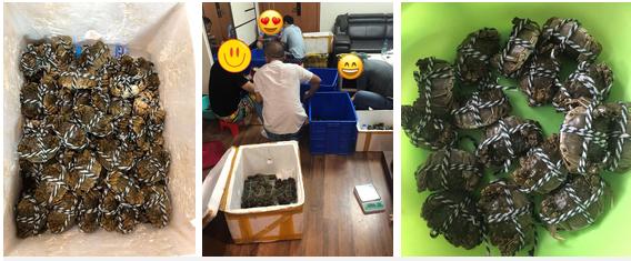 Cua lông về Việt Nam đang loạn giá, người tiêu dùng bất ngờ vì siêu rẻ, có nơi bán 70K/con-2