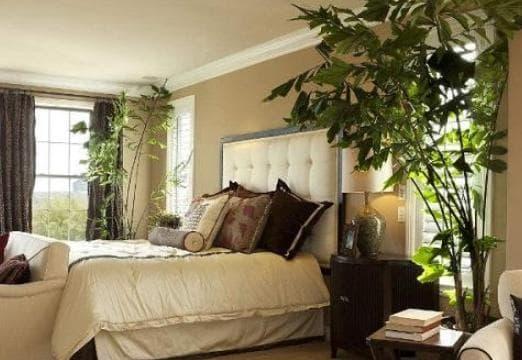 Những cây cảnh nào nên và không nên đặt trong phòng ngủ?-1