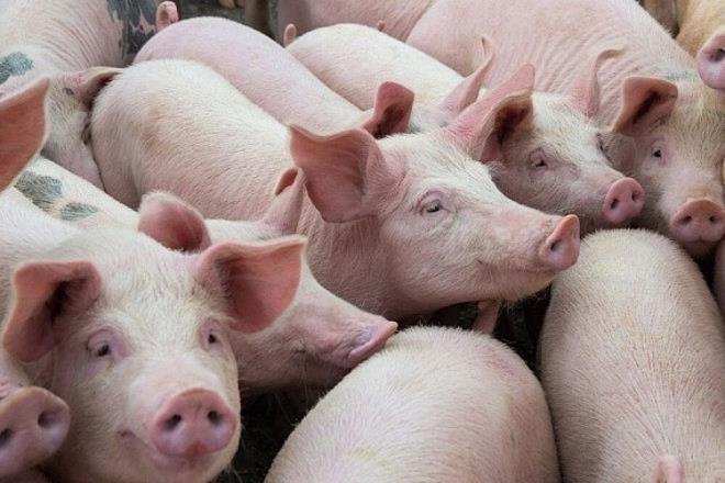 Giá lợn hơi giảm mạnh, xuất hiện mức 60.000 đồng/kg-1